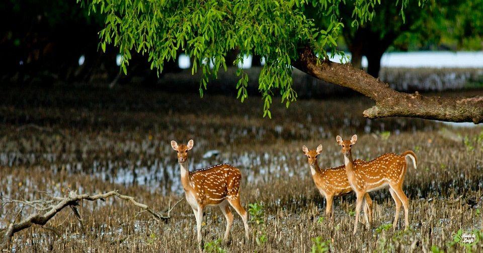 Sundarban-Slide-1