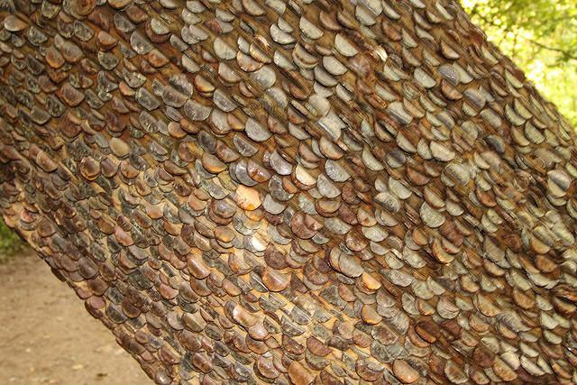 ingleton money tree 1