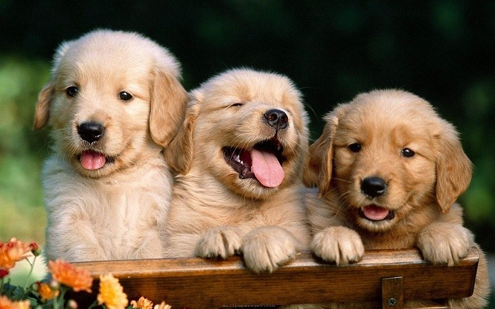 cute-dogs-and-puppies-wallpaper-2