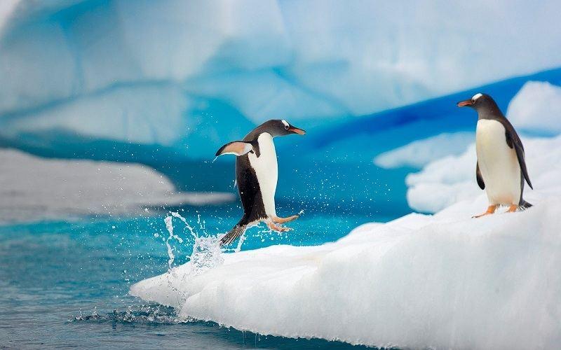 hd-penguin-wallpaper-