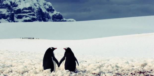 penguins_1